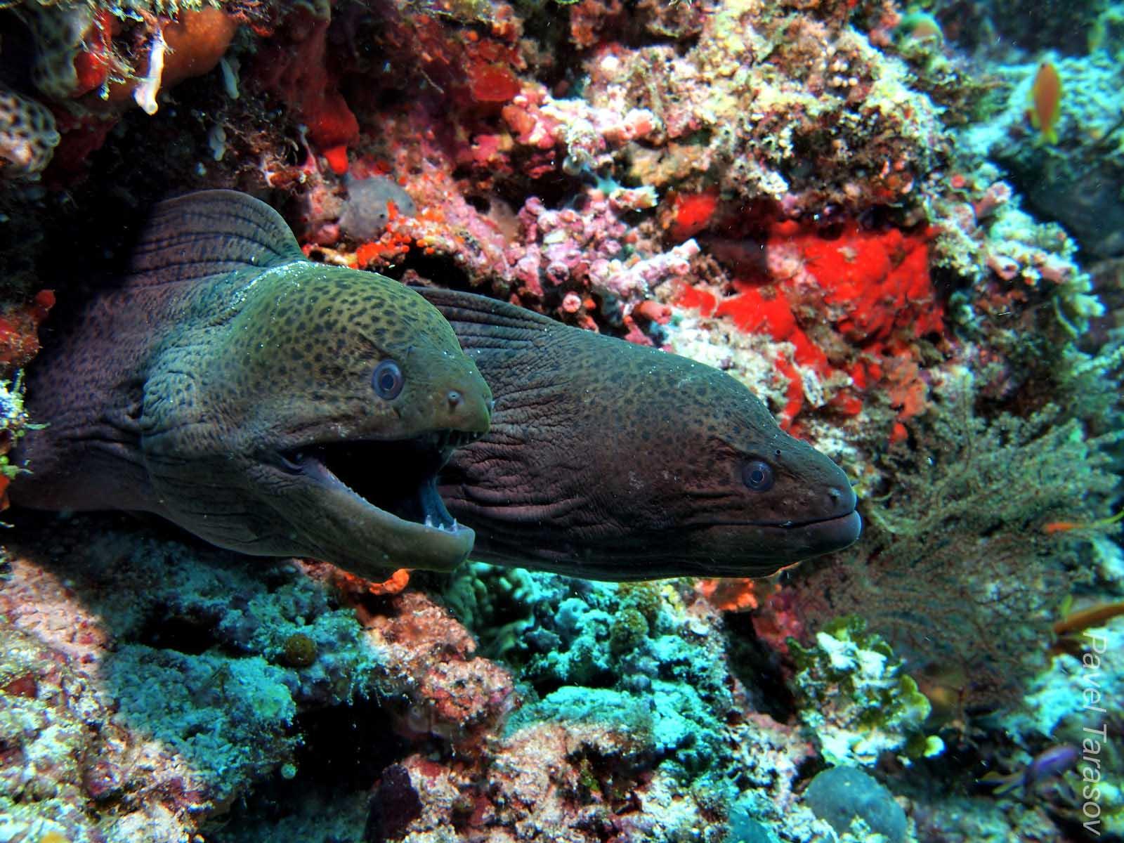 строительные материалы фото мурены в океане перевязка эффективна